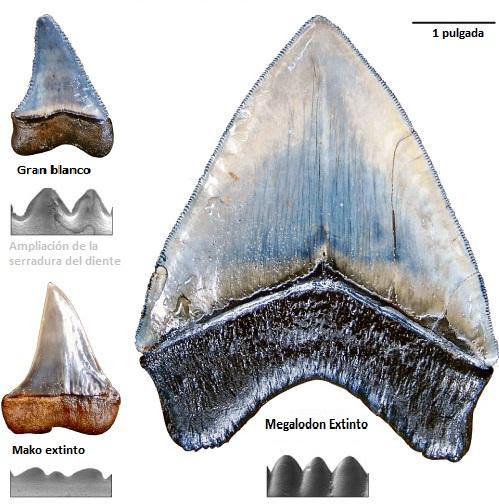 ampliacion dientes
