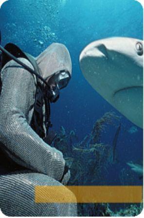 buceo tiburones