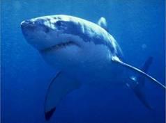 mitos tiburones