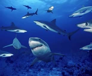donde viven los tiburones