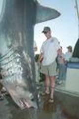 tiburon mako gigante