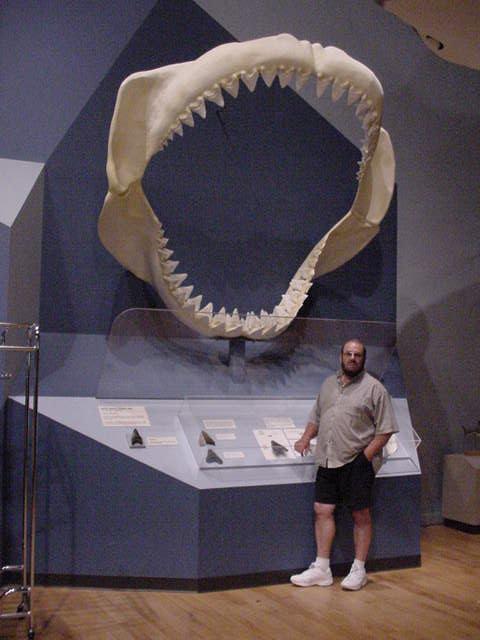 madibula-megalodon