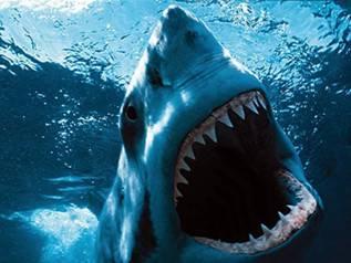orca vs tiburon