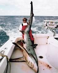 tiburon muerto