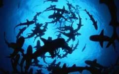 grupo tiburones