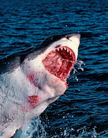 tiburon asesino