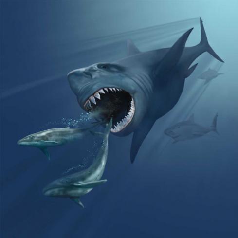 tiburon cazando