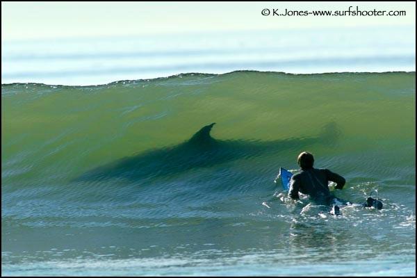 tiburon surfeando