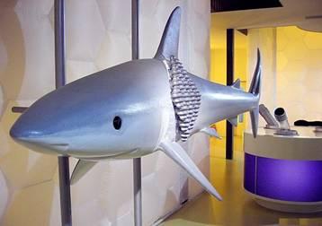piel tiburon