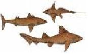 tiburon prehistorico