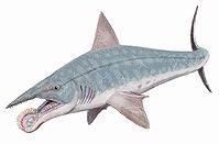 Tiburon prehistorico Helicoprion